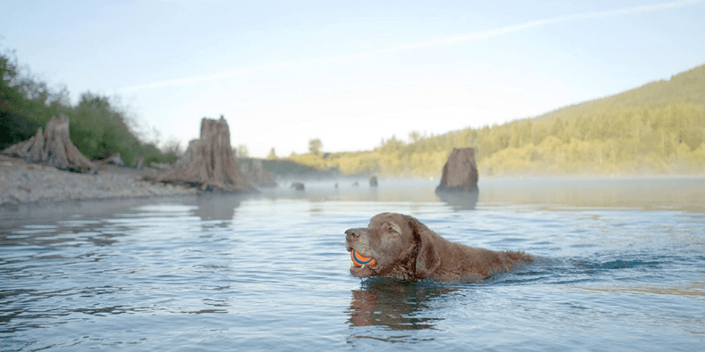 Chuckit Ultra Ball with dog in a lake