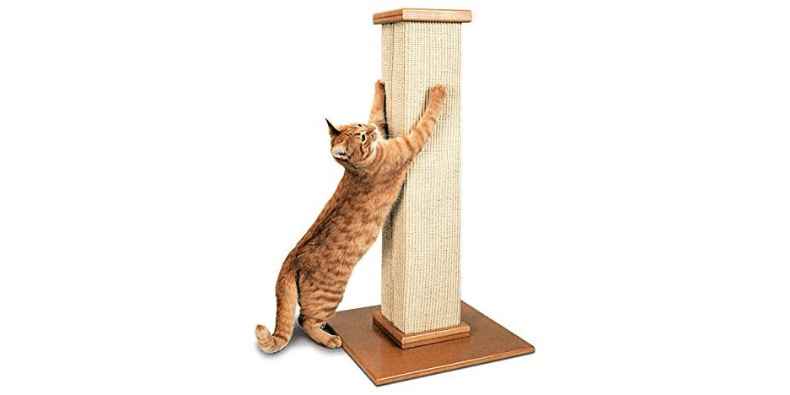 Smart Cat The Ultimate Scratching Post on white background