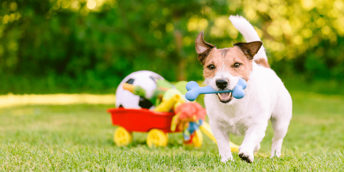 happy dog running and playing with toys