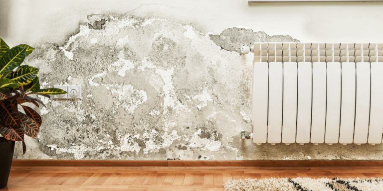 A damp wall with destroyed paint that needs fixing